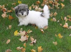 Puppy in the leaves by LackaMunny, via Flickr.