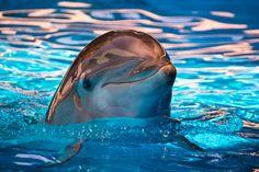 Bottle-nose Dolphin II by Maegan Nash, via 500px