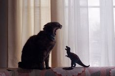 Kitty vs. Dinosaur. Kitty wins by running in fro t of the t-rex and making it fall over...t-rex can't do push ups ;)