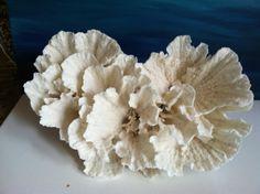 Just Reduced! Large Saltwater Decorative Poca Coral Gift Beach wedding coastal nautical centerpiece