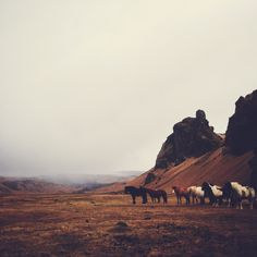 Icelandic horses   Arthur Chang   VSCO Grid