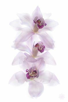 Orchids by Jacky Parker on 500px