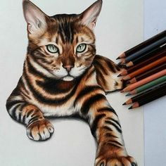 Repost from @nahinart  Bengal Cat . . . For this drawing I used: - Faber Castell Polychromo coloured pencils . - Hahnemühle Nostalgie Sketch Pad . . . #zeichnen#zeichnung #draw #drawing #art #artist #kunst #bleistift#pencil #Instaartexplorer #young_artists_help #_debo_ #art_spotlight #art__explorer #worldofpencils #artspipl #instartists #artifeature #dailyartistiq #arts_help #arts_gallery #sketch_daily #artistsdrop #artdiscovered #arts_secret #art_empire #worldofpencils #snaptweet#cat…