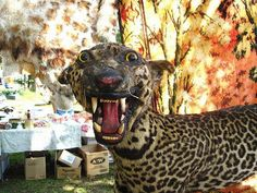 Check out our collection of the 30 funniest taxidermy-gone-wrong photos. Funny Taxidermy, Vashta Nerada, Macabre, Panther, Giraffe, Creepy, Cats, Derby, Strange Things
