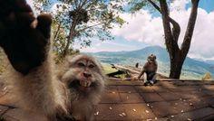 #funny #funnyanimals #monkey