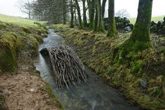 """Alder branches form a bridge in a Dumfriesshire, Scotland, stream. (Jan. 17, 2014) British artist Andy Goldsworthy works in the fields and forests near his home in Scotland using natural elements as his media. His pieces have a tendency to collapse, decay and melt, but, as he tells Fresh Air's Terry Gross, """"It's not about art. It's just about life and the need to understand that a lot of things in life do not last."""""""