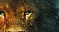Image result for Judah Come Unto Me, Jesus Christ, Israel, Legs, Animals, Image, Animales, Animaux, Animal