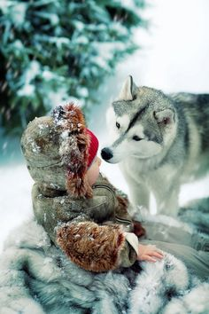 The shock of red surrounded by white and fur looks like an open wound that the wolf is smelling. This is not a wolf, but a Siberian Husky. The original editor should have known the difference so that neither breeds get a bad rep. Husky Tumblr, Animals Beautiful, Cute Animals, Wild Animals, Foto Picture, My Husky, Cat Dog, Alaskan Malamute, Malamute Husky