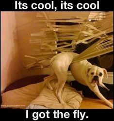 This is the collection of 43 funny looking animals you probably check them now. These funny animal pictures are hilarious and awesome. Funny Dogs, Funny Animals, Cute Animals, Funny Boxer, Silly Dogs, Funny Memes, Funny Sayings, Awkward Animals, Funny Farm