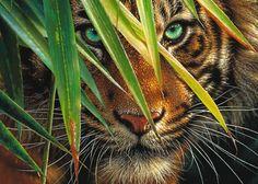 Puzzle Tigre Mystérieux Ravensburger-19486 1000 pièces Puzzles - Tigres - Planet'Puzzles Art Tigre, Mens Tiger Tattoo, Puzzles, Puzzle Ravensburger, Angry Tiger, Tiger Wallpaper, Animal Mugs, Tiger Art, Animais