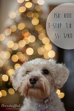 How to achieve Christmas Light bokeh in the background of a photo by lalakme, via Flickr