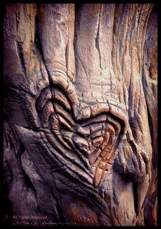 heart growth