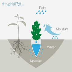 Hydria Pot is a root irrigation system that collects water from morning dew droplets into a clay pot container.