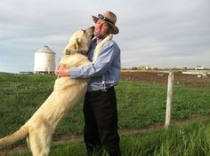 Why are Kurdish Kangal Dogs Illegal in the US? Dog Training Techniques, Dog Training Tips, Shelter Dogs, Animal Shelter, Shelters, Kangal Dog, Maremma Sheepdog, Pet Insurance Reviews, Cheap Pets