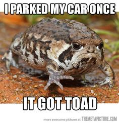 Grumpy Toad......!!!!it is like a turtles best friend shelled him out!!!!