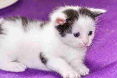 Katzen-Baby so süss