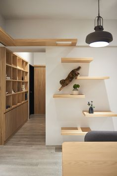 30 Modern DIY Cat Playground Ideas In Your Interior Home Design And Interior Home Design, Interior Design, Design Ideas, Cat Design, Interior Modern, Traditional Interior, Diy Interior, Interior Doors, Animal Room