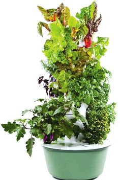 Now you can grow your own vegetables with effortless ease and zero mess.  Read this article from Clean Cuisine about Tower Gardens. #cleancuisineandmore #veggies #towergarden