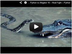 Python vs Alligator! Watch here:  http://gdurl.tk/7B