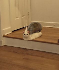 Awkward half-cat loafing on the stairs sparks Photoshop battle no one expected Cute Funny Animals, Funny Animal Pictures, Cute Baby Animals, Funny Cute, Stupid Pictures, Funny Pics, Cute Cat Memes, Funny Memes, I Love Cats