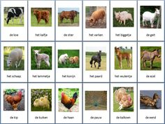 Tip: uitprinten memorie of voor een… Learn Dutch, Farm Day, Dutch Language, School Items, Montessori Materials, Farm Animals, Natural, Cool Pictures, Animal Cards