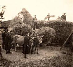 Resultado de imagen de Trabajos de labores del campo antiguas