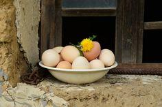 eggs and dandelion