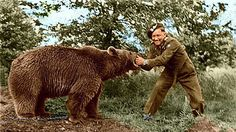 "Wojtek The Bear - Polish WWII Hero. Wojtek was officially enlisted in the Polish Army and given the rank of Private. Private Wojtek ""helped"" unload trucks packed with heavy artillery boxes, carrying heavy crates of mortar shells. Wojtek Bear, Army Photography, Military History, Military Photos, Animals Are Beautiful People, Ww2 Pictures, World War Two, Wwii, Hero"