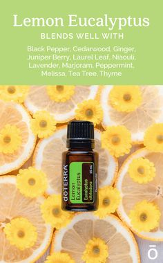 Eucalyptus Essential Oil Uses, Lemon Eucalyptus Oil, Essential Oil Safety, What Are Essential Oils, Doterra Essential Oils, Essential Oil Blends, Citrus Oil, Diffuser Blends, Blessings