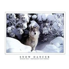 ''Snow Dancer'' by Tracy Brooks Photography Art Print