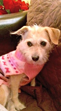 Pin By Sharon Mcdonald On Need Homes Mutt Dog Dogs Cairn