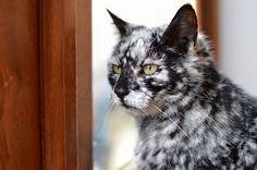"""とっっっっても珍しい白班を持つ""""黒猫""""が話題に!!!→海外「黄色い目とのコントラストも美しい」"""