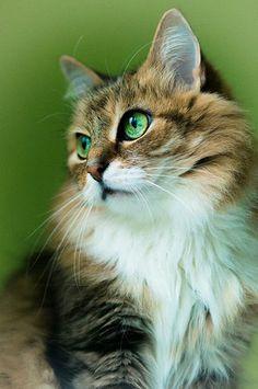 ❤ Cats ❤ - Koleksiyonlar - Google+