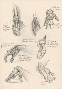 hands anatomy .by Michael Mentler