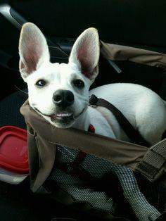 Happy Dog https://imgur.com/mUaeULU