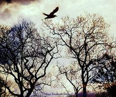 """Photography: """"Trees are the poems to the sky"""", Photo credits by Helena Simões da Costa © 2016 (in Lisboa) No meu artigo de hoje, Fotografia e Poesia, no blog do Arlindo. Some of my photographic work here: http://helenasimoesdacosta.wix.com/helencostafotografia #sky #clouds"""