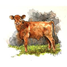 """Brown calf watercolor original painting 7"""" x 6"""" animal art pen and ink... (€64) ❤ liked on Polyvore featuring home, home decor, wall art, cow home decor, animal wall art, ink painting, animal paintings and cow painting"""