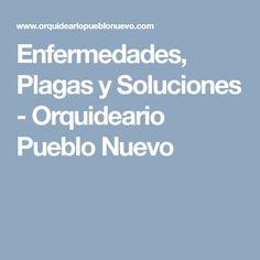 Enfermedades, Plagas y Soluciones - Orquideario Pueblo Nuevo