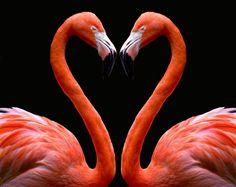 Kissing Flamingo Heart orange pink - Kim Avent-DiLorenzo