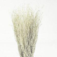 Botte de branches de bouleau coloréesChampagne Glitter