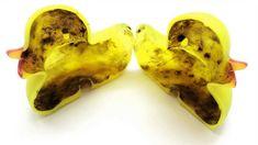 News - Tipp:  https://ift.tt/2uA5D0w  Studie: Gummienten sind häufig von Bakterien und Pilzen befallen #nachrichten