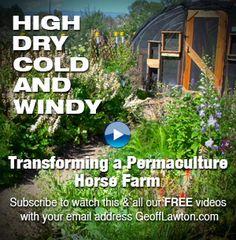 Geoff Lawton Videos Geoff Lawton, Homesteads, Urban Farming, Horse Farms, Permaculture, Country Life, Acre, Garden Ideas, Survival