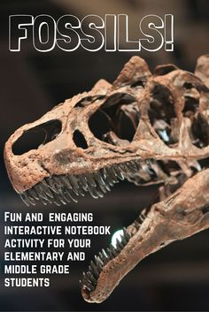 This expository reading passage, key vocab, summary questions, student activity sheet, and teacher key was created for upper elementary and middle school students. This is a very popular lesson in my class that enriches body systems (skeletal) by having students play the role of a paleontologist that has discovered the bones of a new dinosaur. Students use a diagram of a human skeleton (included) to determine similarites and find clues to help correctly assemble the dinosaur skeleton.