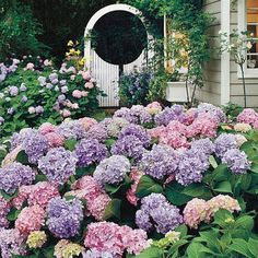 "l love Hydrangeas! Or as my Grandmother calls them ""Snowballs""  :)"