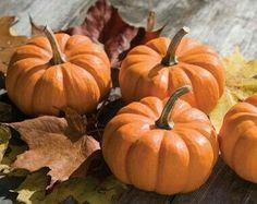 Fairytale Pumpkin Pie