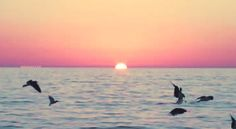 Love ♥ Light ॐ Peace ☮