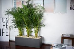 officeplants-gallery12.jpg (470×313)