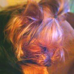 Nap time Gucci, Dreadlocks, Hair Styles, Baby, Hair Plait Styles, Hair Makeup, Hairdos, Haircut Styles, Dreads