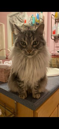Lost & Found - 9 & 10 News Douglas Lake, Found Cat, Gold Dragon, 10 News, Traverse City, Lost & Found, Maine Coon, 9 And 10, Cats