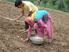 Chipping in to help India's farmers grow potatoes. | Mercy Corps